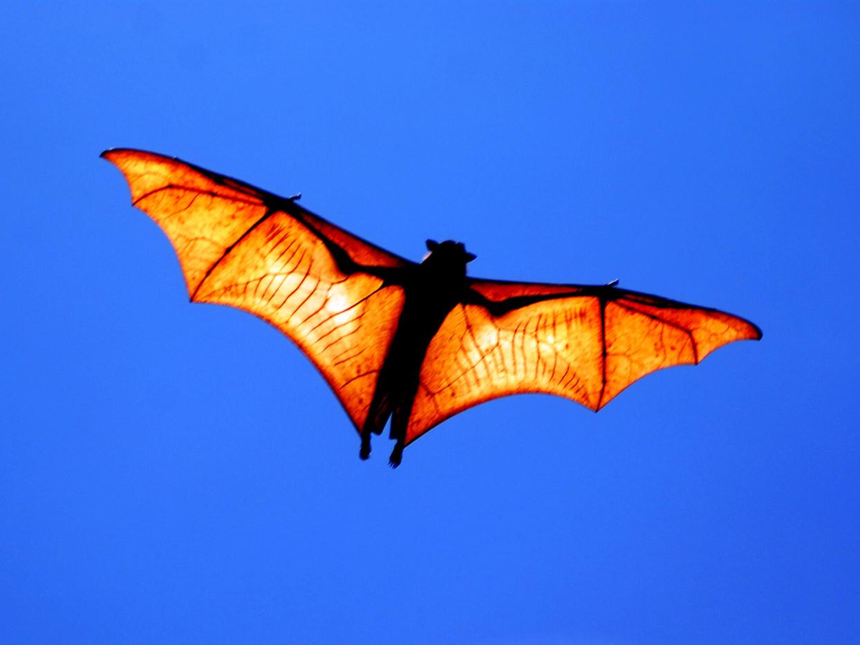 King Crown Bat Bat Sanctuary,Tubajon.JPG