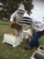 Beekeeping. New-Bee. Beekeping Classes. No Glove Beekeping. Calm.