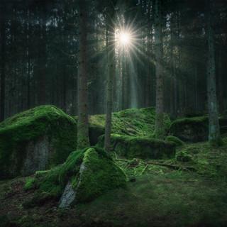 Bäume und Wälder