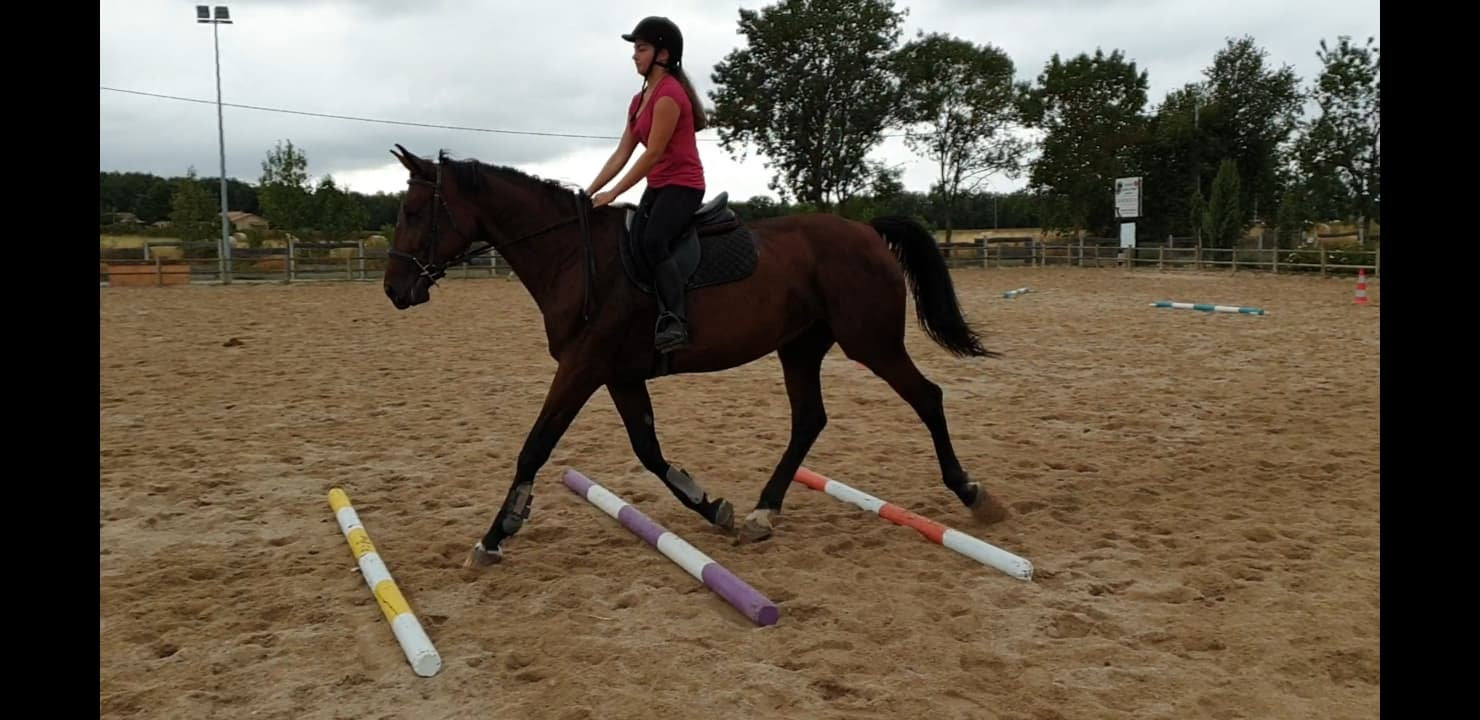 Cours Galop 1 - 2