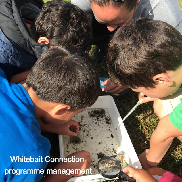 Whitebait Connection programme management