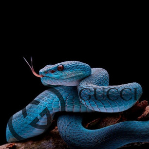 Blue Snake Gucci Print.jpg