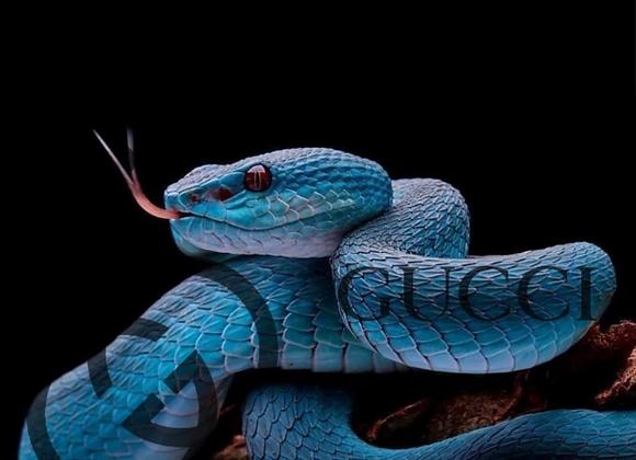 Gucci Blue Snake Artwork