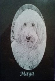 Pet Portrait on Granite 4x6