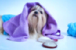 Груминг киев | Город Киев | Sandra-Groom/Grooming-Zoo Magazin-Pet Otel