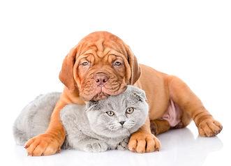 СКИДКА для малышей -20%  Для наших любимых щенят и котят (до 6мес) дейсвует скидка 20% на все услуги сети груминг-салонов SandraGroom.