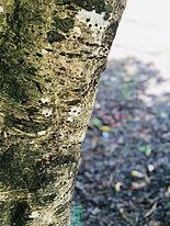 tree 4.jpg