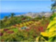 Madeira (1).jpg