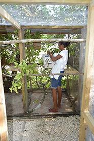 Celeshia putting birds in quarantine enclosure