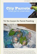 City Parrots about BBR