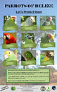 Protect our parrots poster