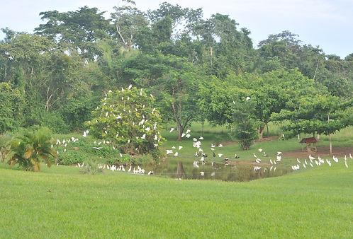 Water bird rehabilitation pond