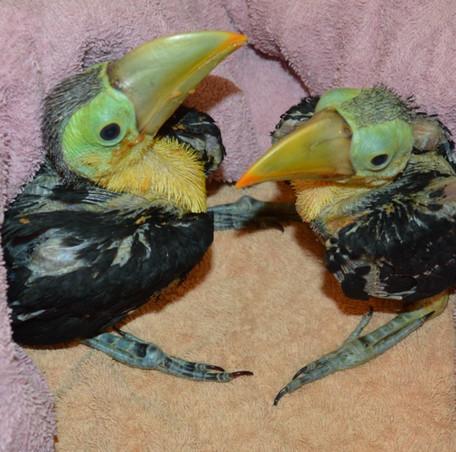 toucan 2.jpg