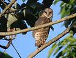 Barn owl information leaflet