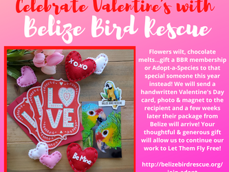 February - for the love of the birds!