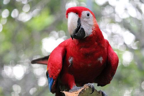 Corporate Member (Macaw)