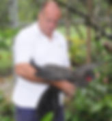 Jerry checking the wings of a crested guam