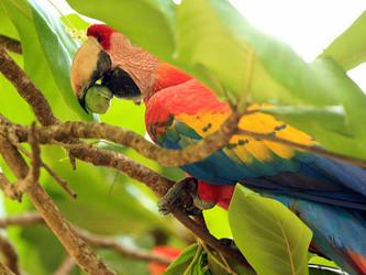 Belize Conservationists vs Norwegian Cruise Lines