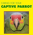 Caring for your captive parrot (in Belize)