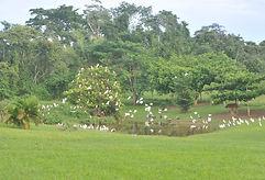 Water bird rehabilitation pond at Belize Bird Rescue