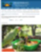 Captve parrot registration programme