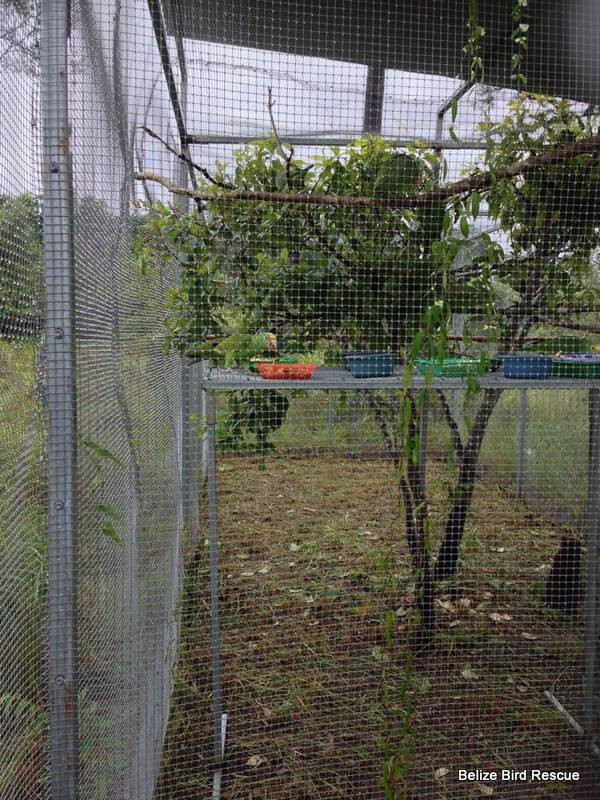 A large new feeding platform which will be moved outside the cage on release. (Amanda Margraves)