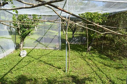 Belize Bird Rescue enclosure