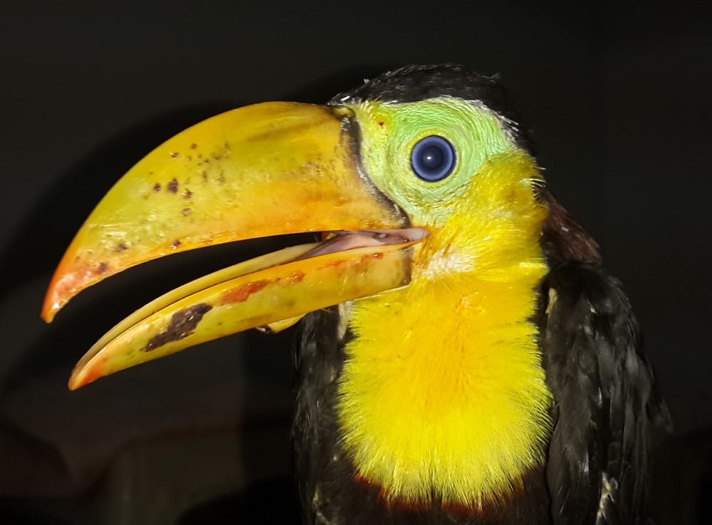 toucan baby 4.jpg