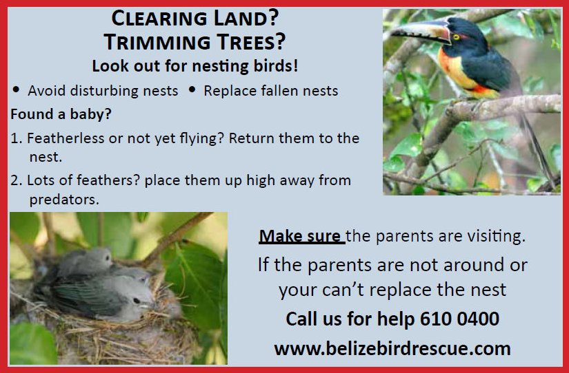 Watch out for nesting birds.jpg