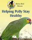 Guide to a healthy parrot (in Belize)