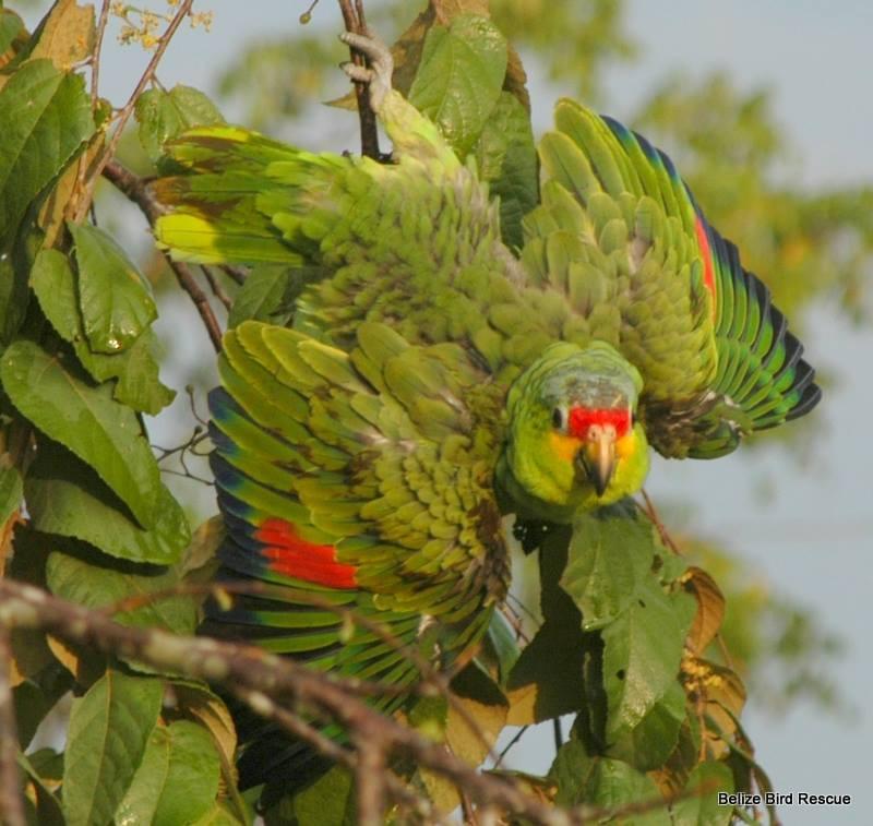 Parrots love their bath!