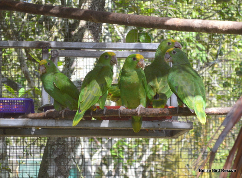 Sme birds just prior to release