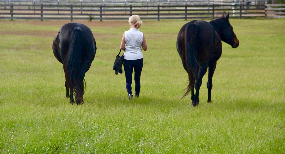 liberty training help trust between human and horse