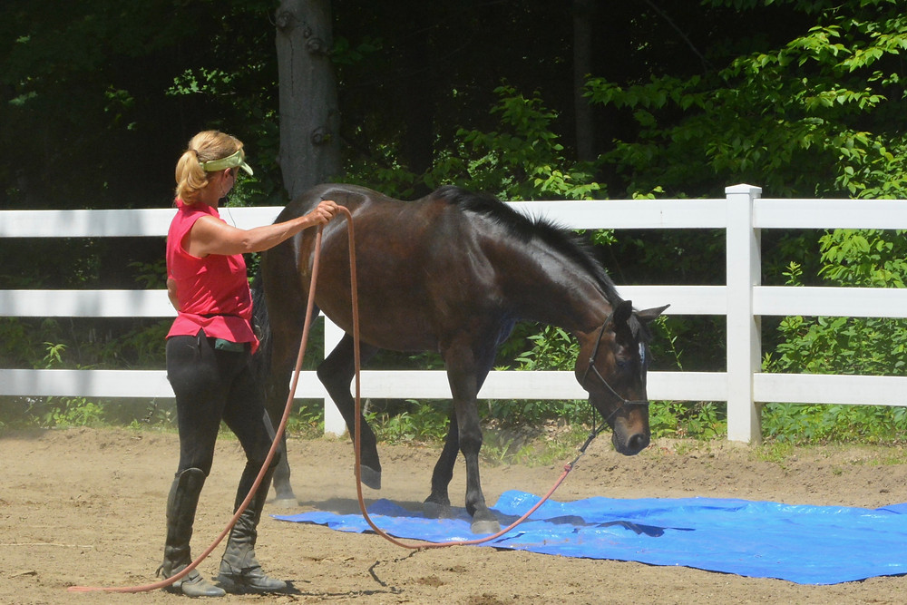asking a horse to walk over tarp