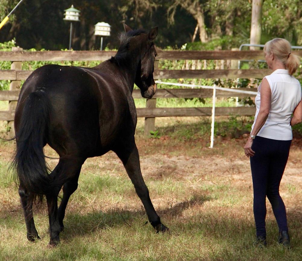 Establishing boundaries with horses