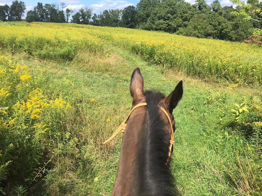 horse ear communication
