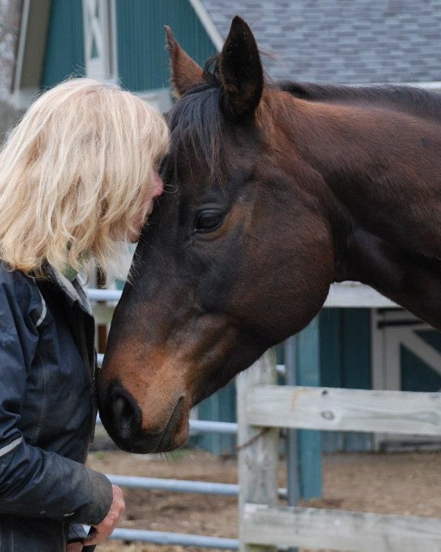 horse and human partnership