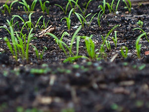 APAL Laboratory Soil Analysis