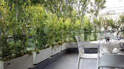 Terraza barrera vegetal