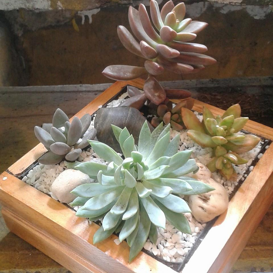 Mini Garden -Suculentas