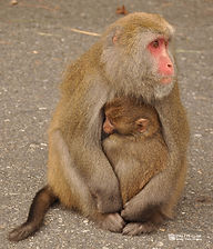 A monkey mom with her baby