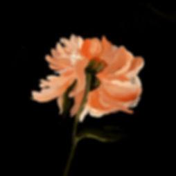 flower in oils megan seres.jpg