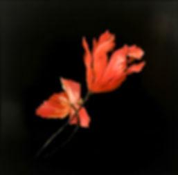 Oil Painting flowers megan seres.jpg