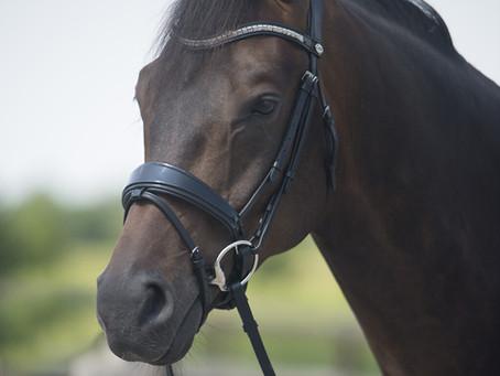Ma boutique d'équitation préféré: Normandie Horse Shop