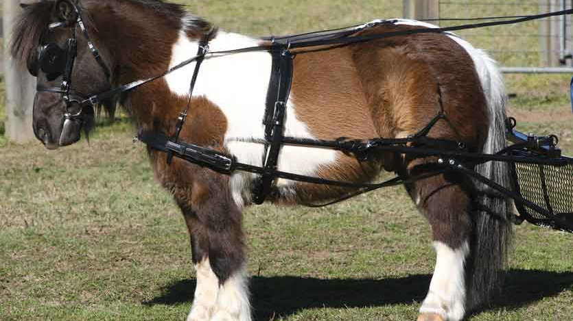 Harnais SL pour petits poneys Zilco