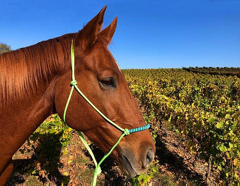 Licol et longe pour le cheval western, licol americain et ethologique pour equitation