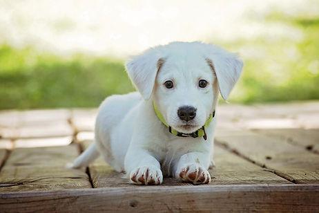 Collier, laisse, jouet et panier pour chien