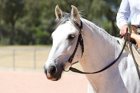bride equitation western et enrenement avec mors, shank, snaffle bit, show 1 oreille
