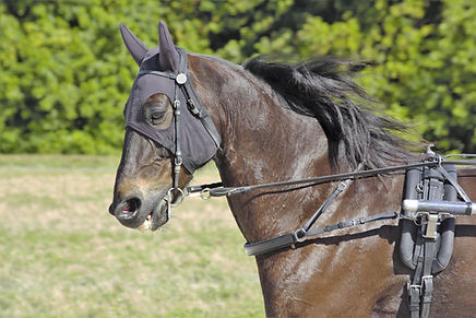 Bride pour cheval trotteur course et ent