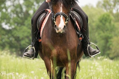 Etrier et etriviere pour selle d'equitation pour cavalier montant à cheval de marque Wintec, Eric Thomas, Norton.